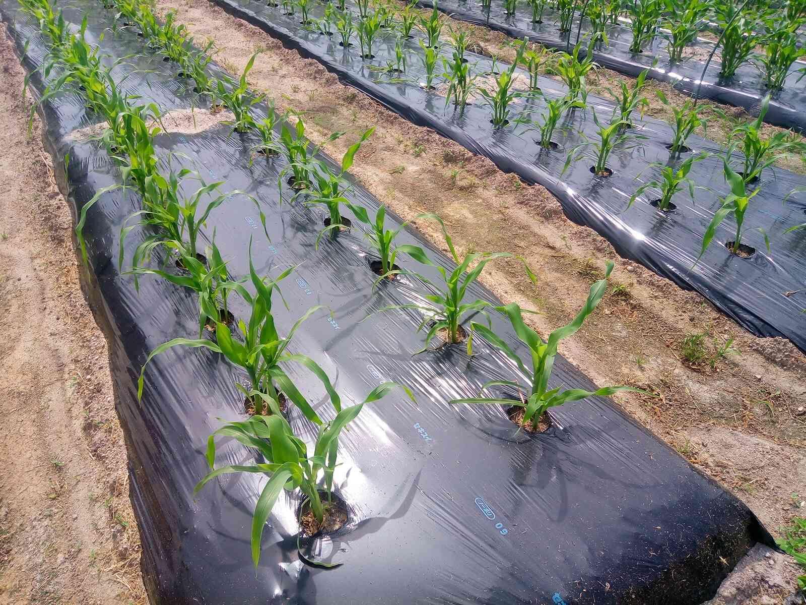 農学部の就職先は多岐に渡る。視野を広く持ち就活しよう!